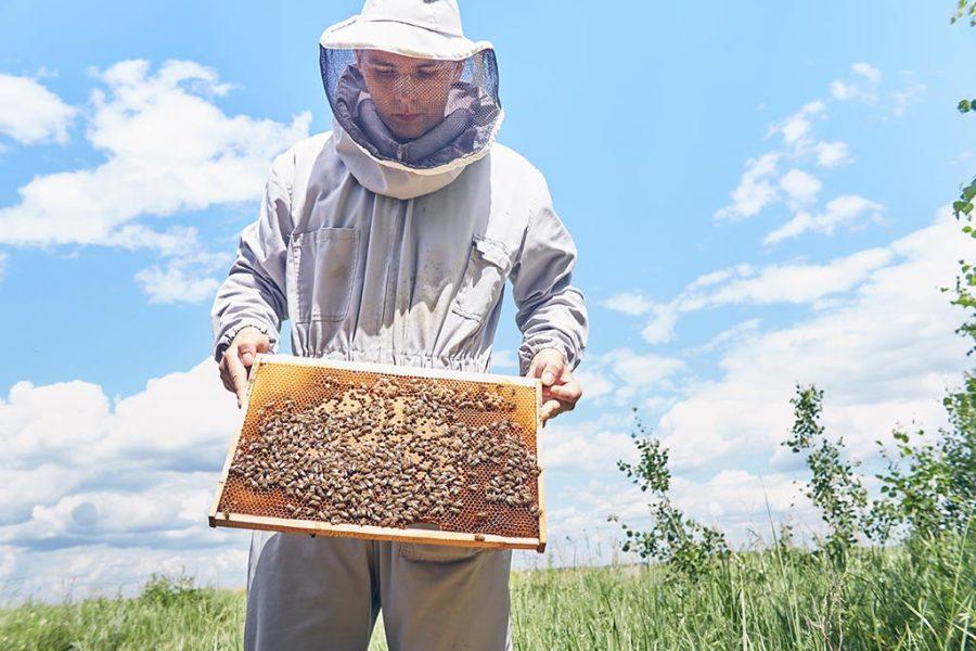 apicultol artesanal
