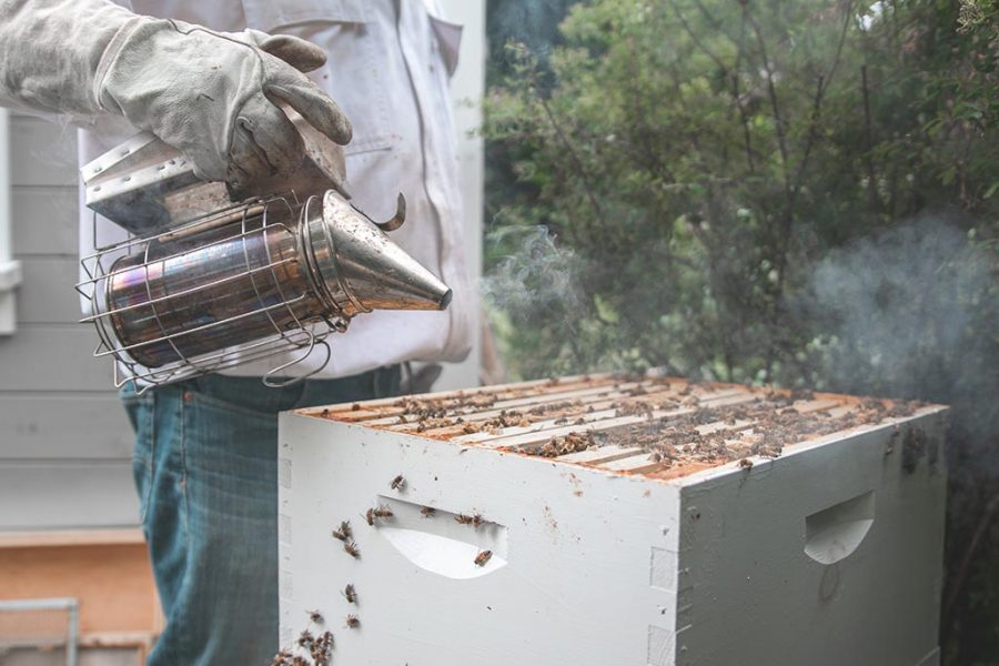 apicultor salamanca