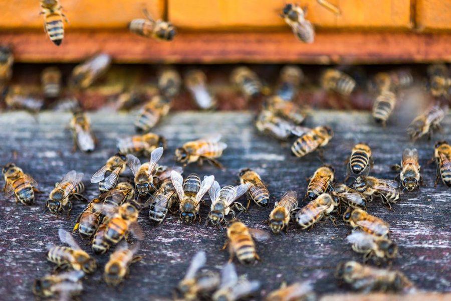 apicultura del rio miel