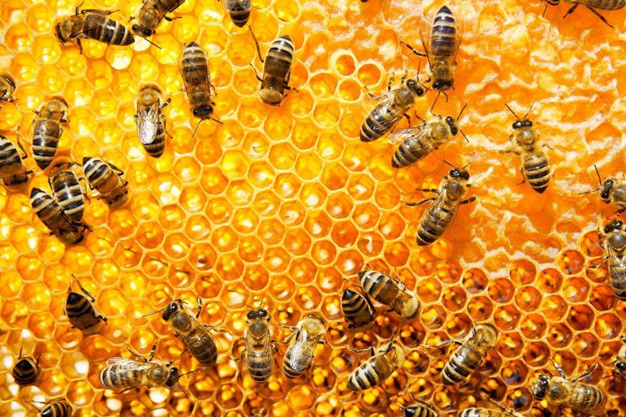 productores de miel artesanal